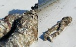 Um manequim totalmente coberto por cracas chocou moradores da comunidadePerdido Key, na Flórida, ao ser confundido com um corpo decapitado