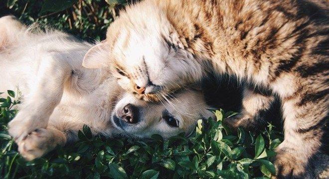 Cães e gatos abandonados receberão 25 toneladas de alimentos