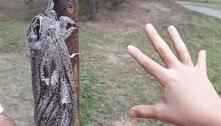 Mariposa maior que punho deixa família chocada durante caminhada