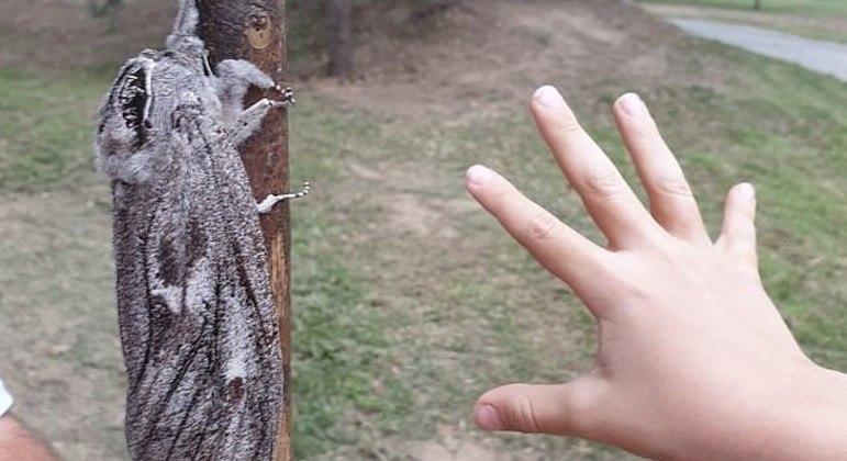 Uma mariposa gigantesca surpreendeu uma família australiana durante caminhada