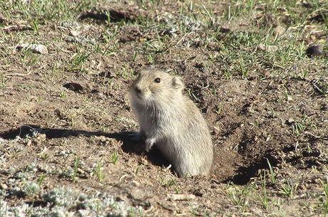 Jovem tinha comido carne de marmota com amigos