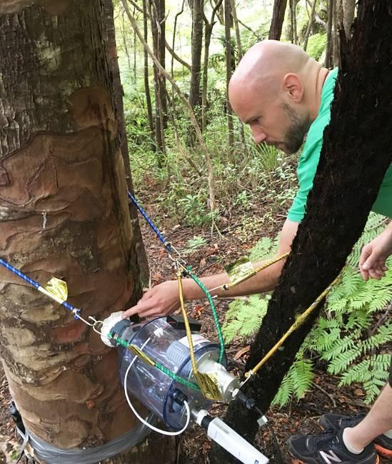 Martin Bader (foto) e Lutzinger mediram o fluxo de água dos kauris vizinhos para o toco