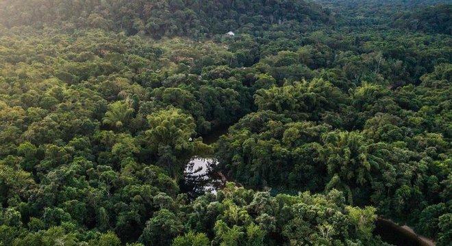 Mata Atlântica é alvo de recuperação florestal no Brasil