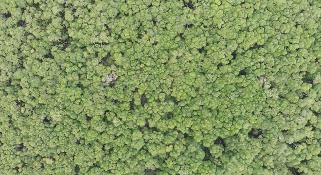 Desmatamento na Mata Atlântica cresceu