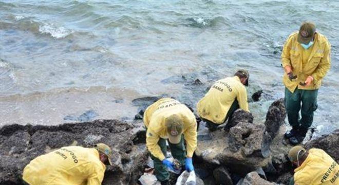 Material foi coletado em 28 de praias de 10 municípios das costa pernambucana