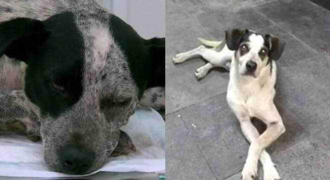 Em muitos casos os animais foram salvos