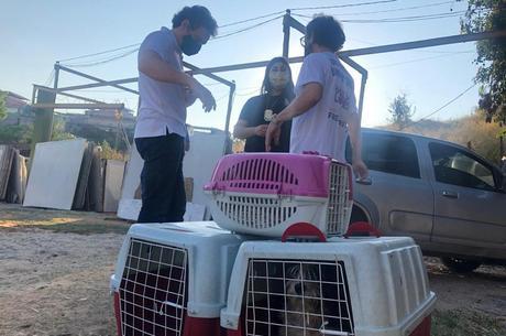 Quatro cães foram resgatados durante a operação