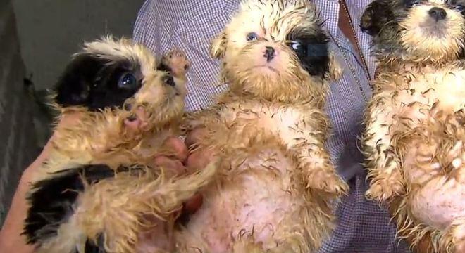 Filhotes são resgatados de canil clandestino em Diadema