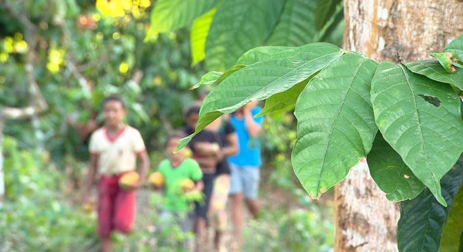 IBGE: Brasil tem 1,77 milhão de crianças em situação de trabalho infantil