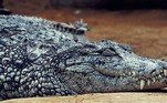 'Nita era uma menina trabalhadora', disse seu tio K. Stephan, em entrevista ao Daily Star, após saber da morte delaNo México, um sem-teto foi arrastado por crocodilos para dentro de uma laguna. Veja a seguir essa história chocante!