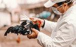 Médico segurando ave.