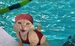 Um perfil no Instagramchamado Broken Cats/ Cattos Memes garante