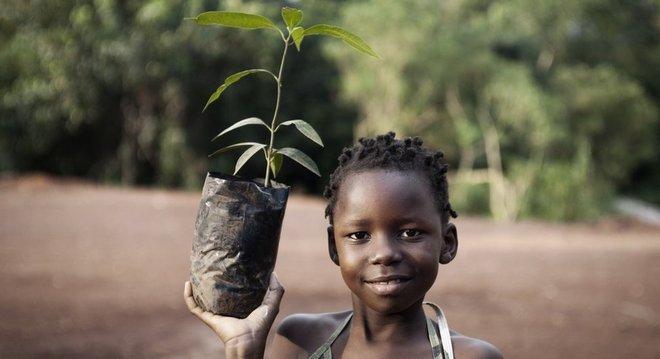 As mangas crescem bem em diversas partes do mundo