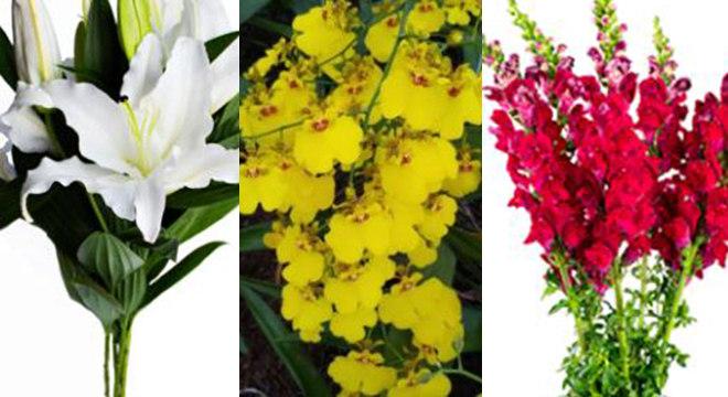 Produtores vendem flores com preço simbólico