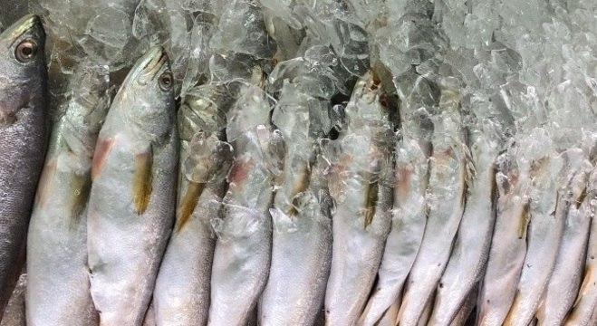 Mercado de Peixes é um dos grandes atrativos de Santos
