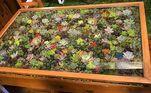 Se você gosta de tons mais vivos, aposte em plantas coloridas