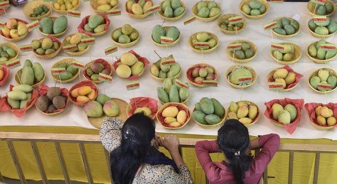 Nunca há um momento de tédio no Festival da Manga em Nova Déli, na Índia: são mais de 500 variedades de mangas para provar