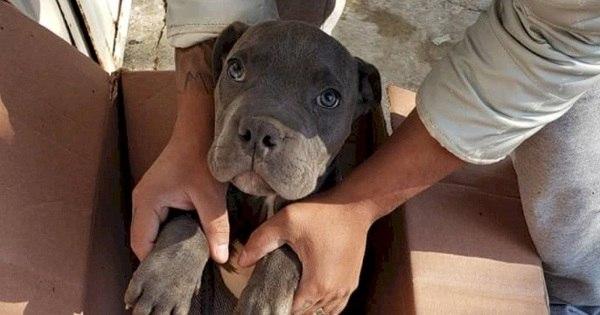 Menino deixa cão em abrigo para protegê-lo da violência do pai