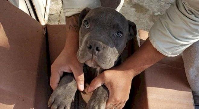 O cãozinho foi encontrado na porta do abrigo na Cidade do México há 2 semanas