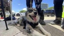 Cães ajudam nas buscas e trazem conforto na tragédia da Flórida