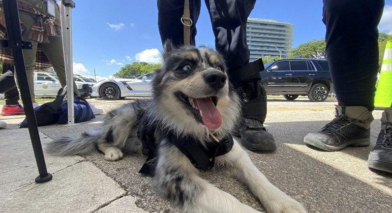 A cachorra Oreo descansa em meio a mais um dia de buscas no desabamento da Flórida