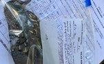 O aposentado registrou cada ave com base na trajetória de voo, hora e local do impactoBombou no HORA 7!Jogo macabro: 'Homem Pateta' pode estar ligado à morte de menino de 11 anos