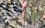 Entre 1.000 e 1.500 aves se chocaram contra arranha-céus da Filadélfia, nos EUA, em um raio de aproximadamente três quarteirões e meio, no centro da cidade