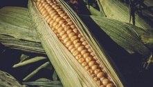 Preços dos alimentos no mundo caem pelo 2º mês seguido, diz FAO