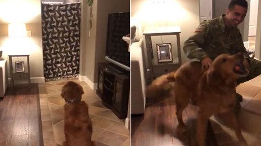 Militar volta para casa e cãozinho chora com surpresa emocionante