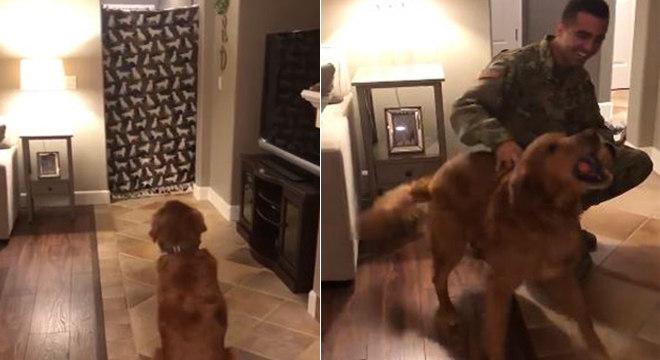 Cachorro aguarda surpresa atrás do pano