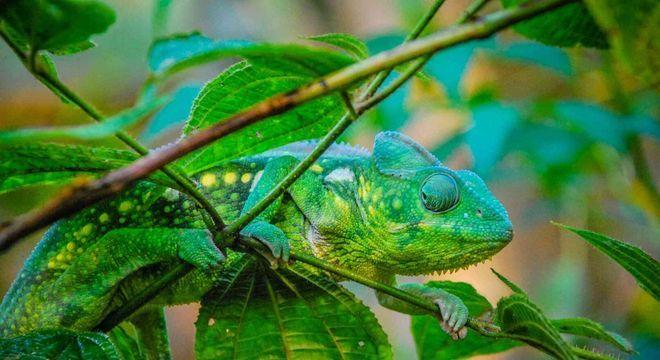 Mimetismo - o que é e principais tipos encontrados na natureza