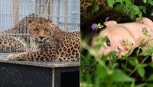 Modelo é atacada por leopardo em casa de repouso para animais