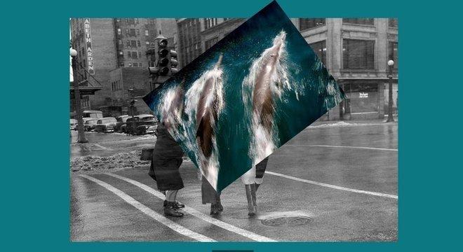 Montagem de fotos de golfinho com pessoas