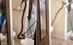 Um morador de Elk Grove, na Califórnia, foi surpreendido por uma jiboia-vermelha com 1,82 m de comprimento dentro de um vaso sanitário