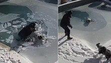 Morador mergulha em piscina congelada para resgatar cachorro