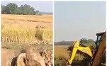 Moradores de uma cidade da Índia tomaram uma atitude heroica para salvar vários elefantes presos em um buraco fundo e pantanoso*Estagiária doR7, sob supervisão de Filipe Siqueira