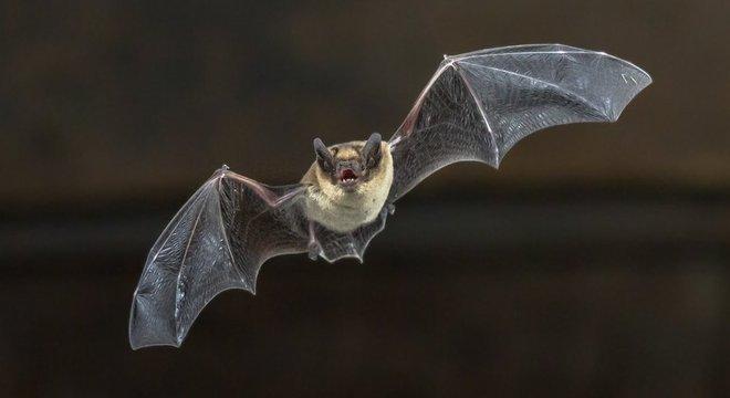 Morcegos não são cegos; eles têm um sistema de 'visão' muito especial