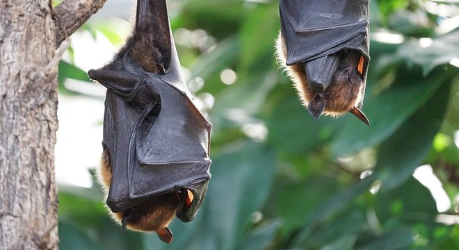 Sars-CoV-2 pode estar circulando entre morcegos há décadas