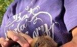 O velhinho nasceu em28 de abril de 1987, em um zoológico da Carolina do Sul (EUA) e nunca pode ser solto na natureza por um motivo que a direção do santuário não especificouVALE SEU CLIQUE:Homem fica arrepiado ao ver criatura 'meio verme, meio rato'