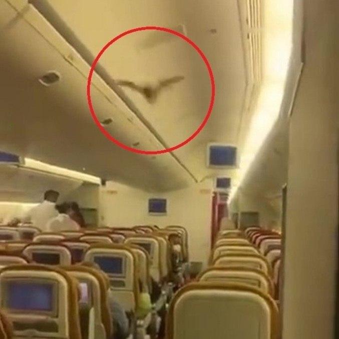 Mamífero voou entre passageiros, que se esconderam