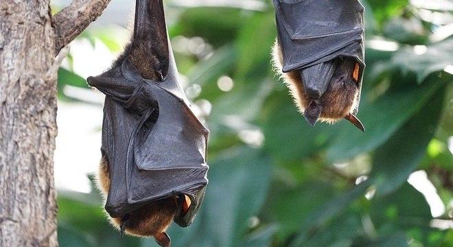 Interferência humana em ambientes silvestres tem causado doenças infecciosas