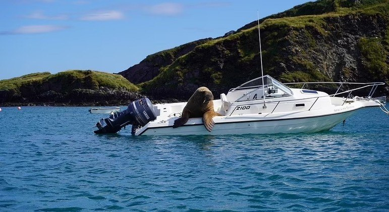 Wally está pronto para capitão de barco