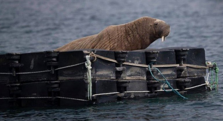 Especialistas esperam que embarcação seja confortável o bastante para ele