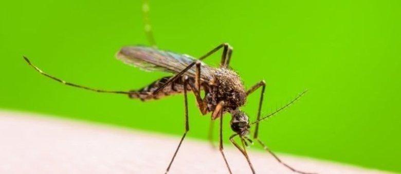 Casos prováveis de dengue já superam os 140 mil em Minas