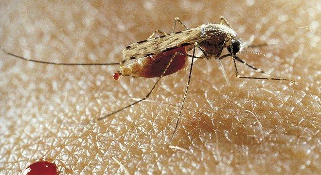 Nove países devem se livrar da malária em 2020