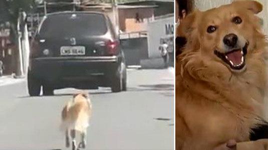 Motorista abandona cachorro no meio da rua em São Paulo (Reprodução/Balanço Geral Manhã)