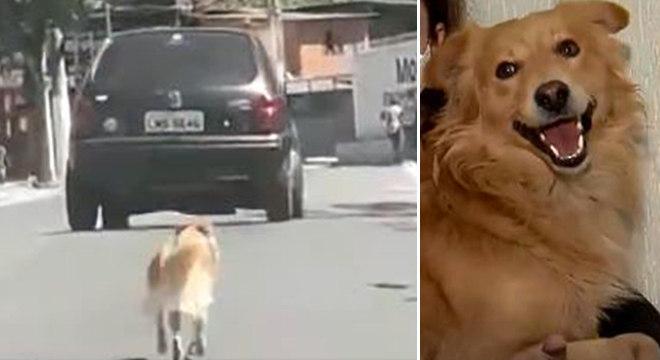 Cachorro foi resgatado e está disponível para adoção