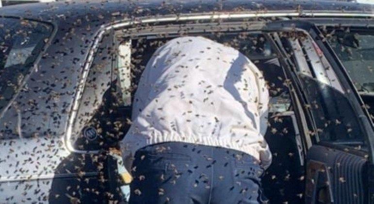 Cerca de 15 mil abelhas invadiram um carro, no estacionamento de um mercado nos EUA