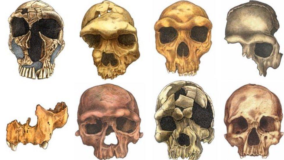 Humanos de hoje têm cabeça menor, sobrancelha mais cheia e rosto mais magro