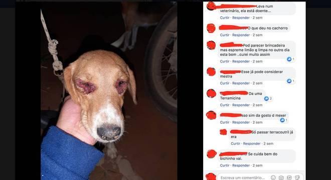 Muitos caçadores contam com o auxílio de cachorros e compartilham infortúnios, como ferimentos causados em perseguições